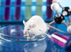 Blijven inzetten op onderzoeken voor alternatieven op proefdieren