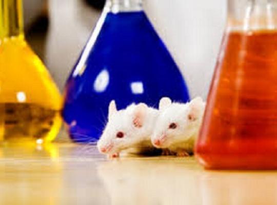 Meestal kleine inbreuken vastgesteld bij gecontroleerde labo's met dierproeven